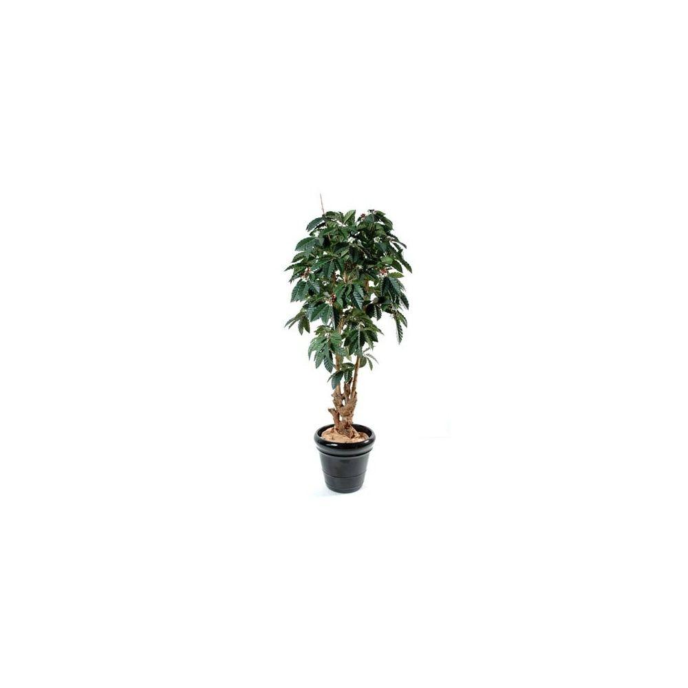 Caf ier tronc noueux h150 cm pot classique plantes et for Plante 150 maladies madagascar