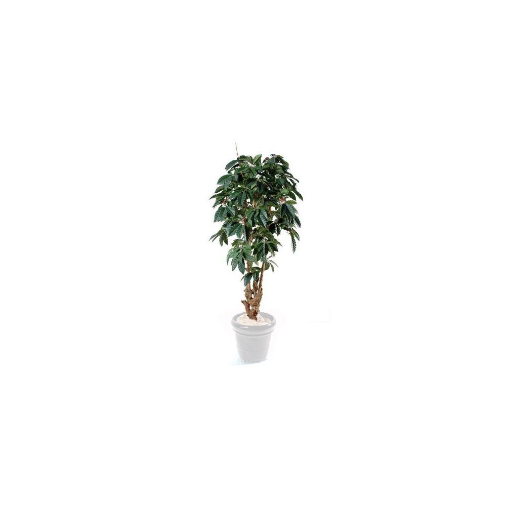 caf ier tronc noueux h180 cm tronc naturel feuillage artificiel non rempot plantes et jardins. Black Bedroom Furniture Sets. Home Design Ideas