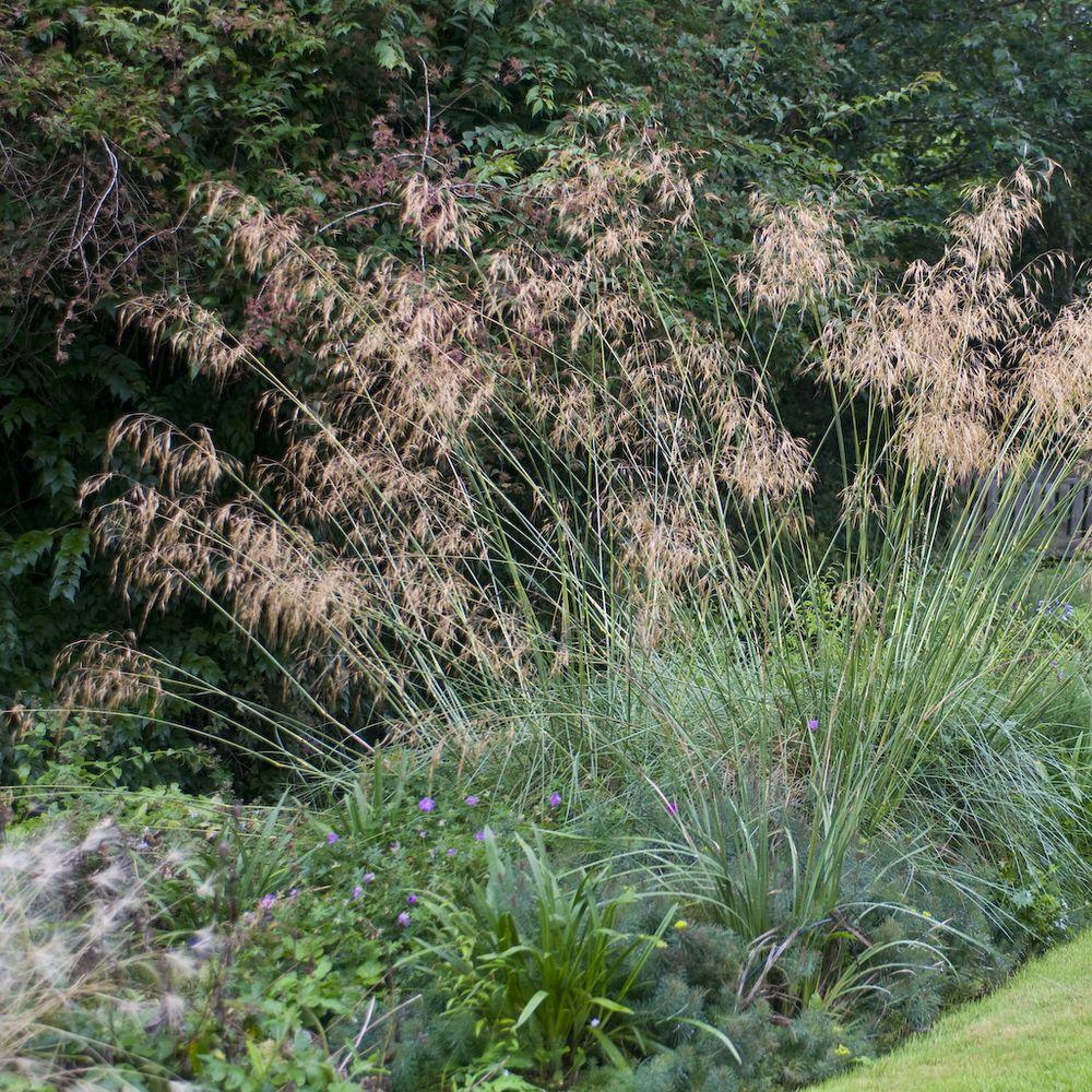 Deschampsia caespitosa plantes et jardins for Jardin et plantes