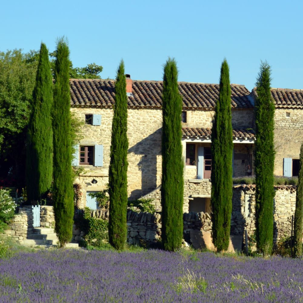 Cypr s d 39 italie 39 stricta 39 plantes et jardins for Jardin d italie chateauroux