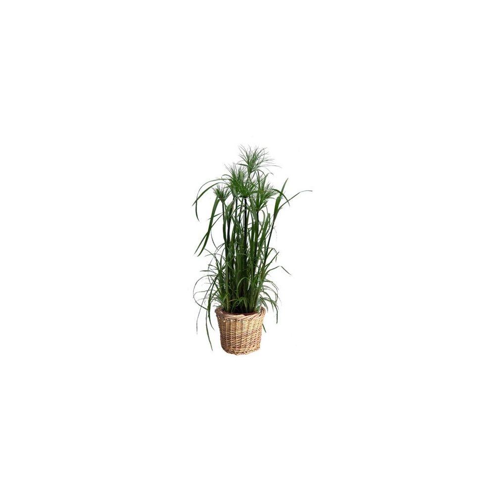 Papyrus du nil cache pot osier plantes et jardins for Jardin du nil wine