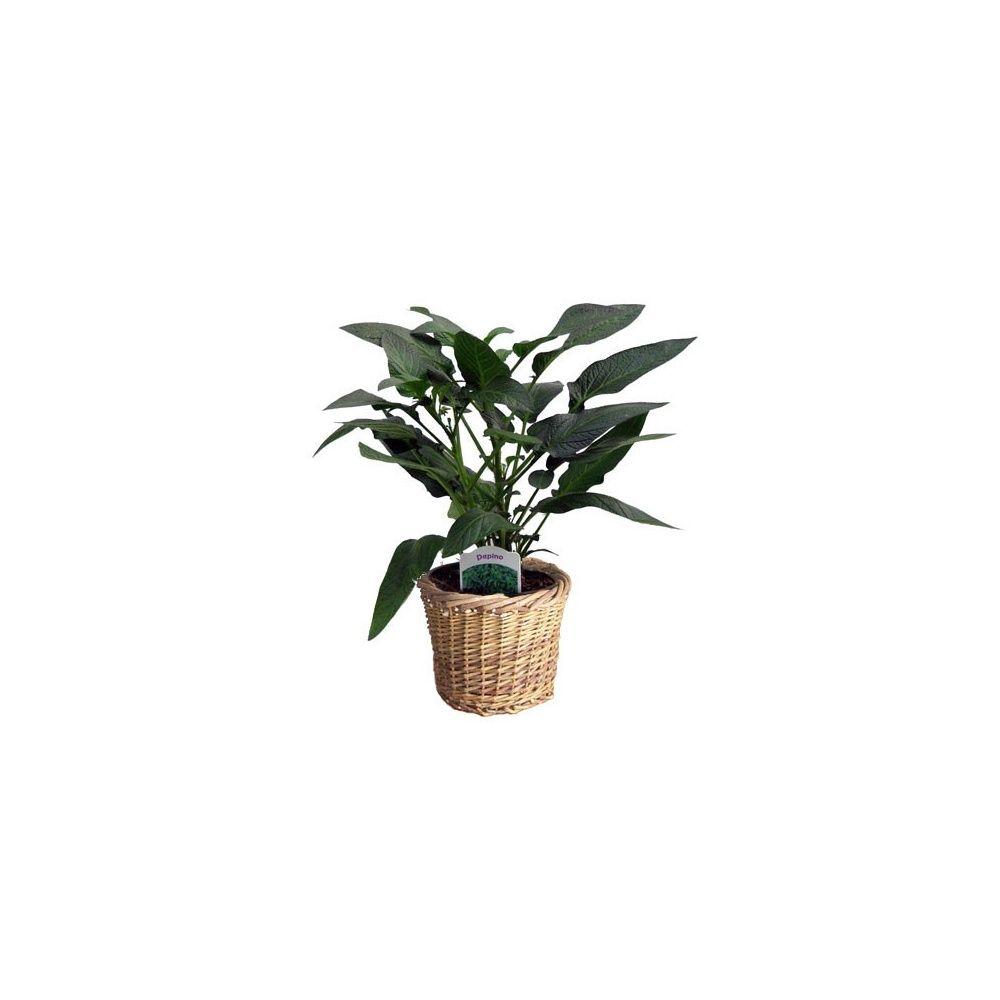 melon poire pepino cache pot osier plantes et jardins. Black Bedroom Furniture Sets. Home Design Ideas