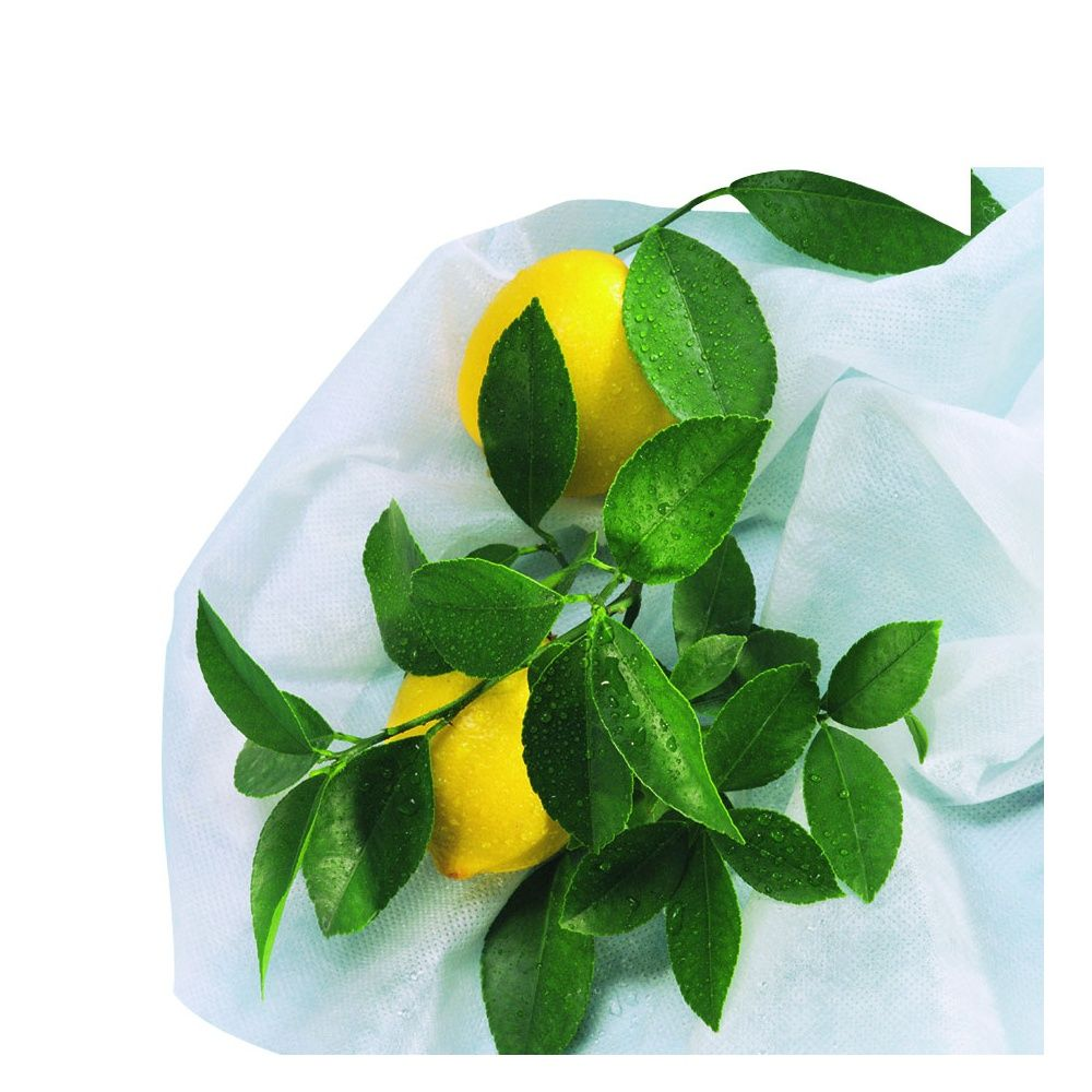 3 housses d 39 hivernage pour plantes et arbustes en pots for Plantes et arbustes
