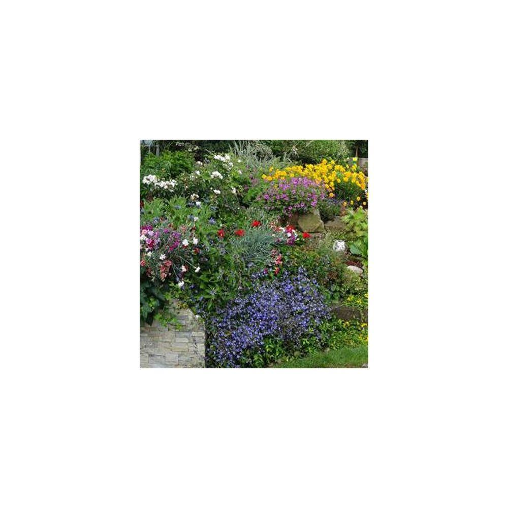 Assortiment rocaille fleurie 75 plantes plantes et jardins for Plantes et jardins