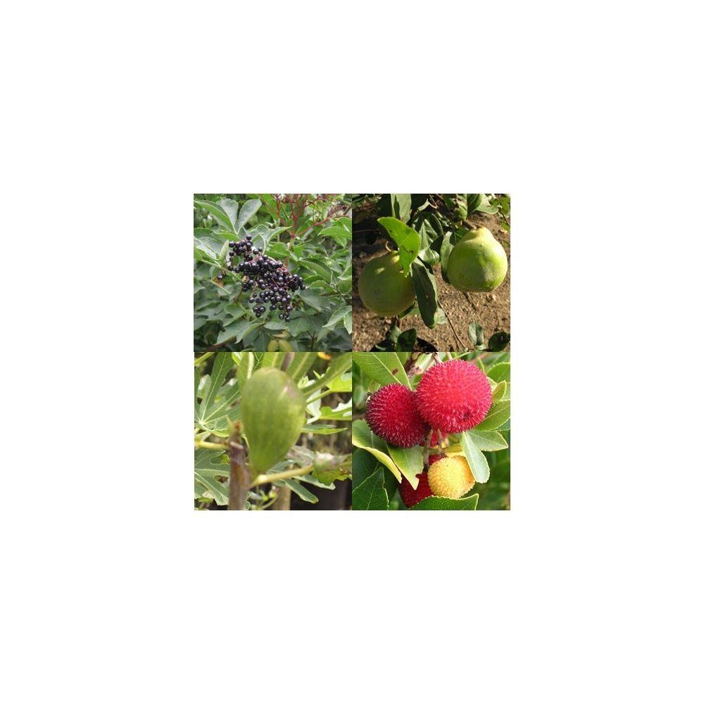 Kit de haie fruitière originale composée de 8 arbustes - Plantes ...