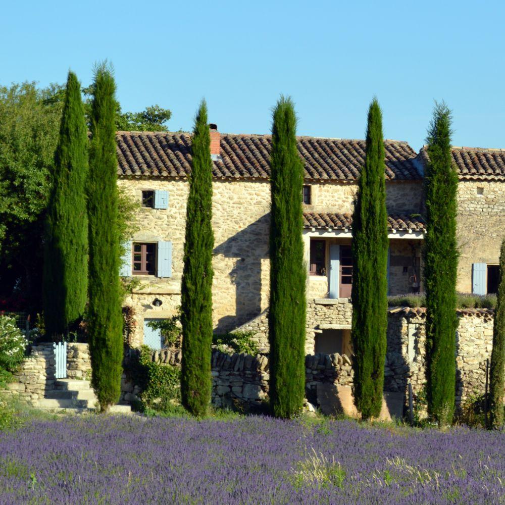 Cypr s d 39 italie 39 stricta 39 plantes et jardins for Jardin italien