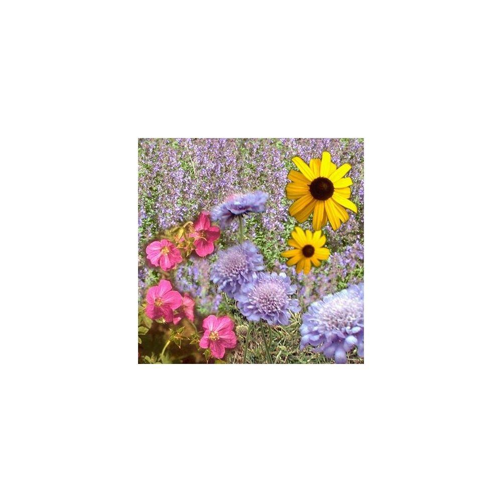 Collection de vivaces longue floraison plantes et jardins - Fleurs vivaces longue floraison ...