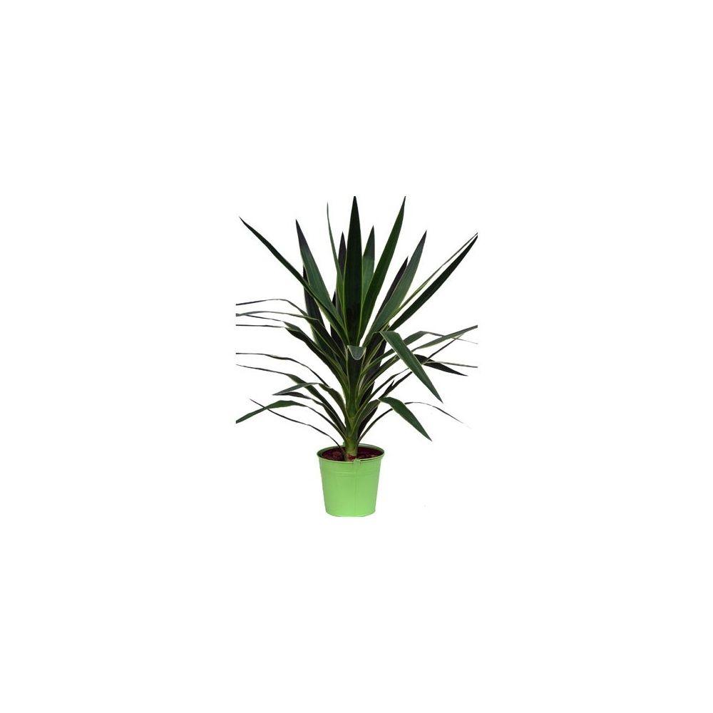 yucca 1 tronc cache pot zinc plantes et jardins. Black Bedroom Furniture Sets. Home Design Ideas