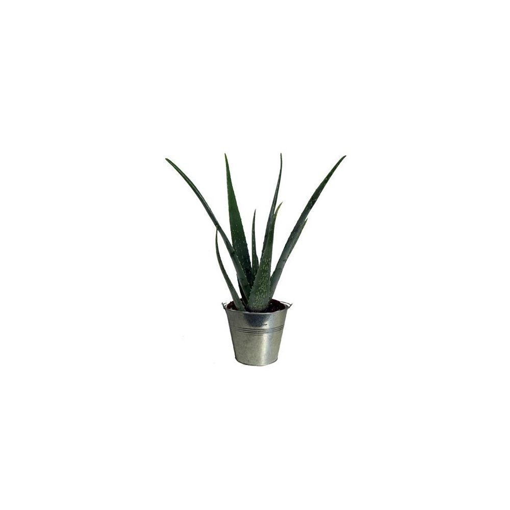 aloe vera cache pot zinc plantes et jardins. Black Bedroom Furniture Sets. Home Design Ideas