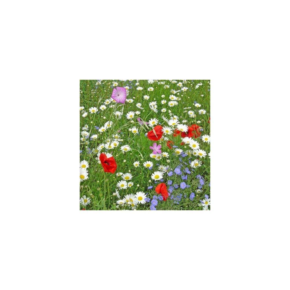 Jach re fleurs des champs plantes et jardins - Fleur de jachere ...