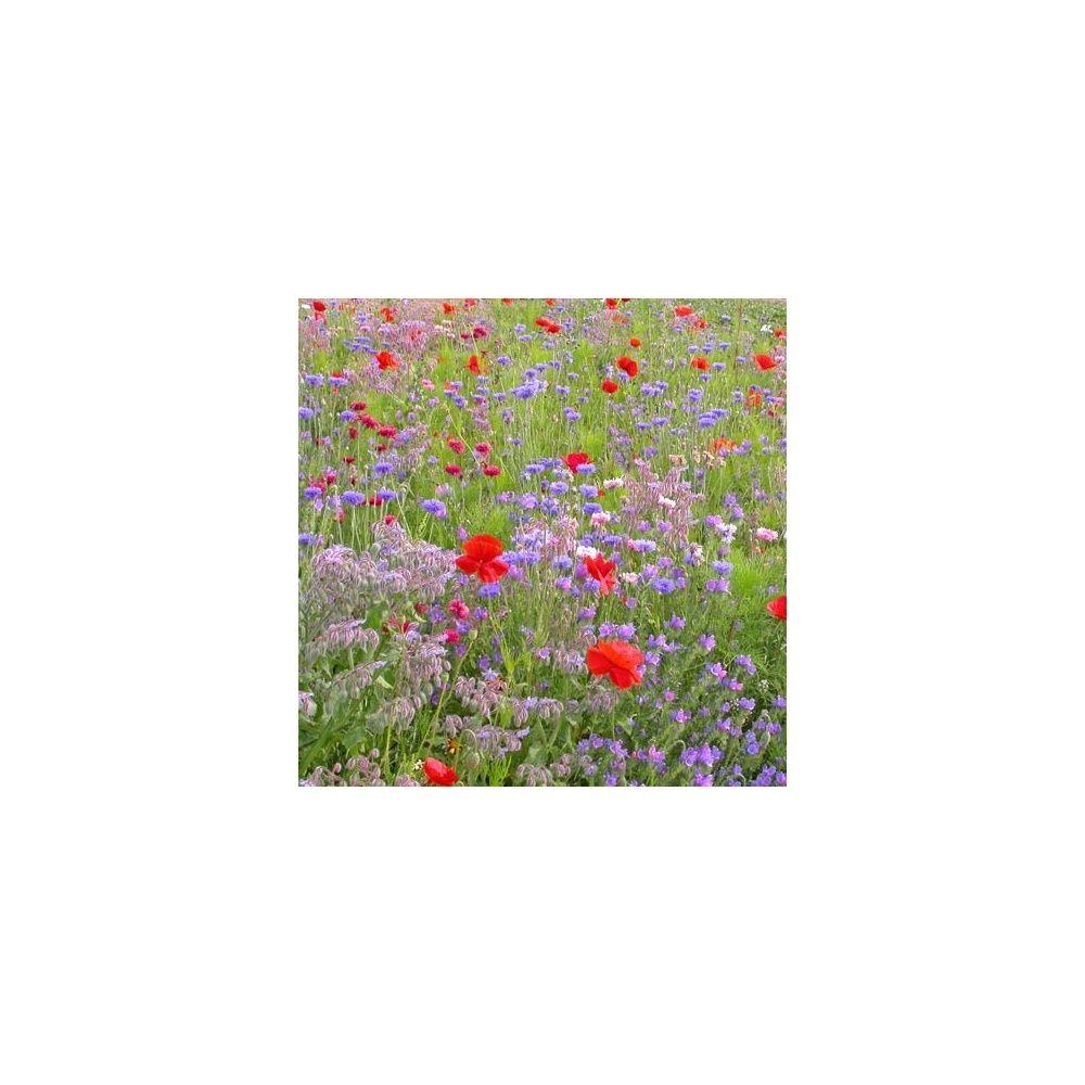 Jach re fleurs miel et papillons plantes et jardins - Fleur de jachere ...