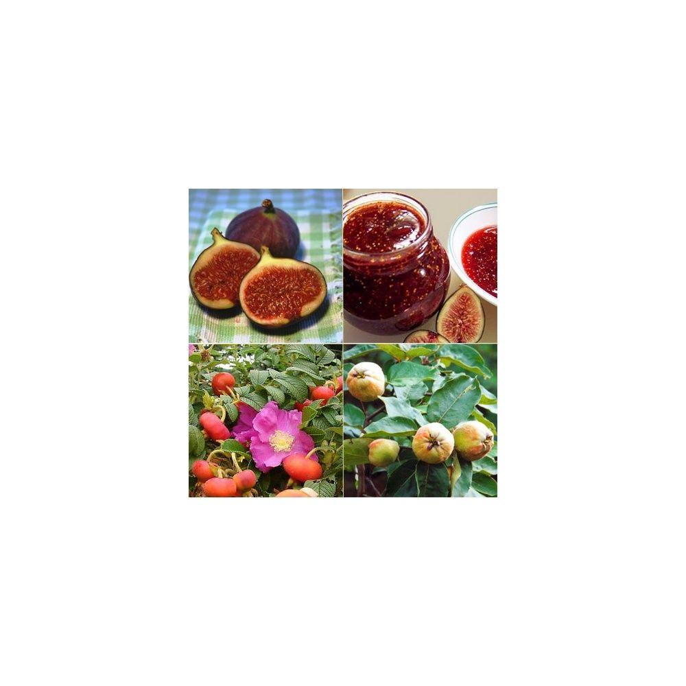 Kit de haie fruitière spéciale confitures - Plantes et Jardins