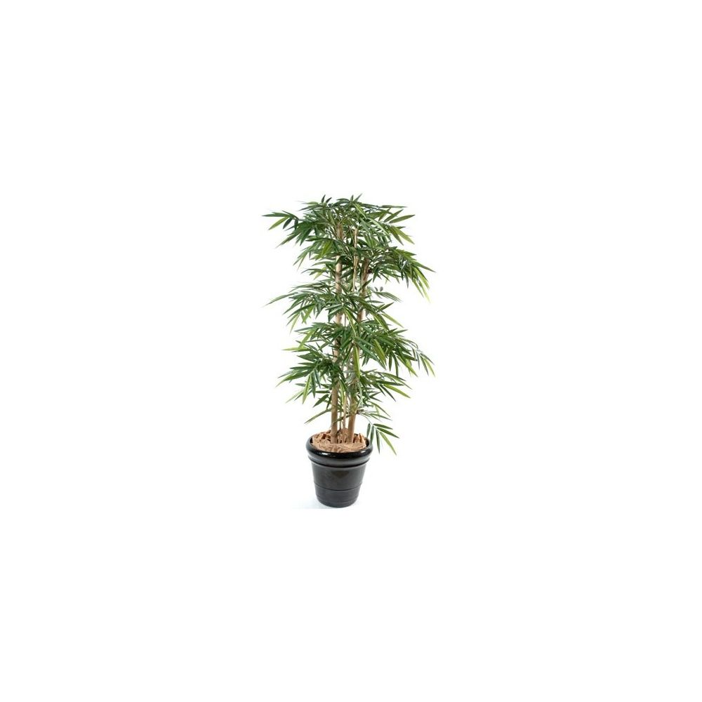 Bambou grosses cannes h180 cm chaumes naturels feuillage for Plante 150 maladies madagascar