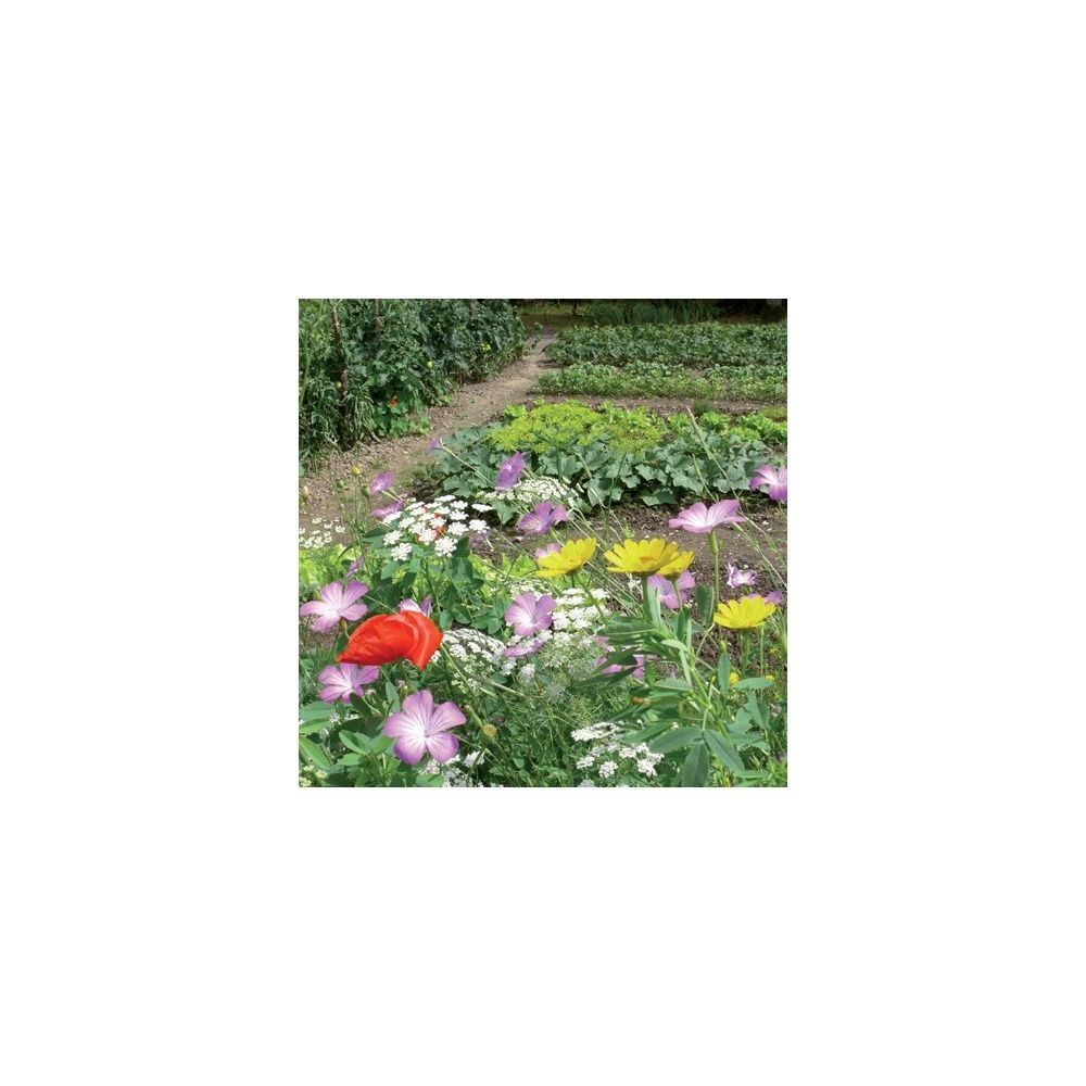 Prairie fleurie les amis du jardin je lutte contre les for Au jardin by les amis