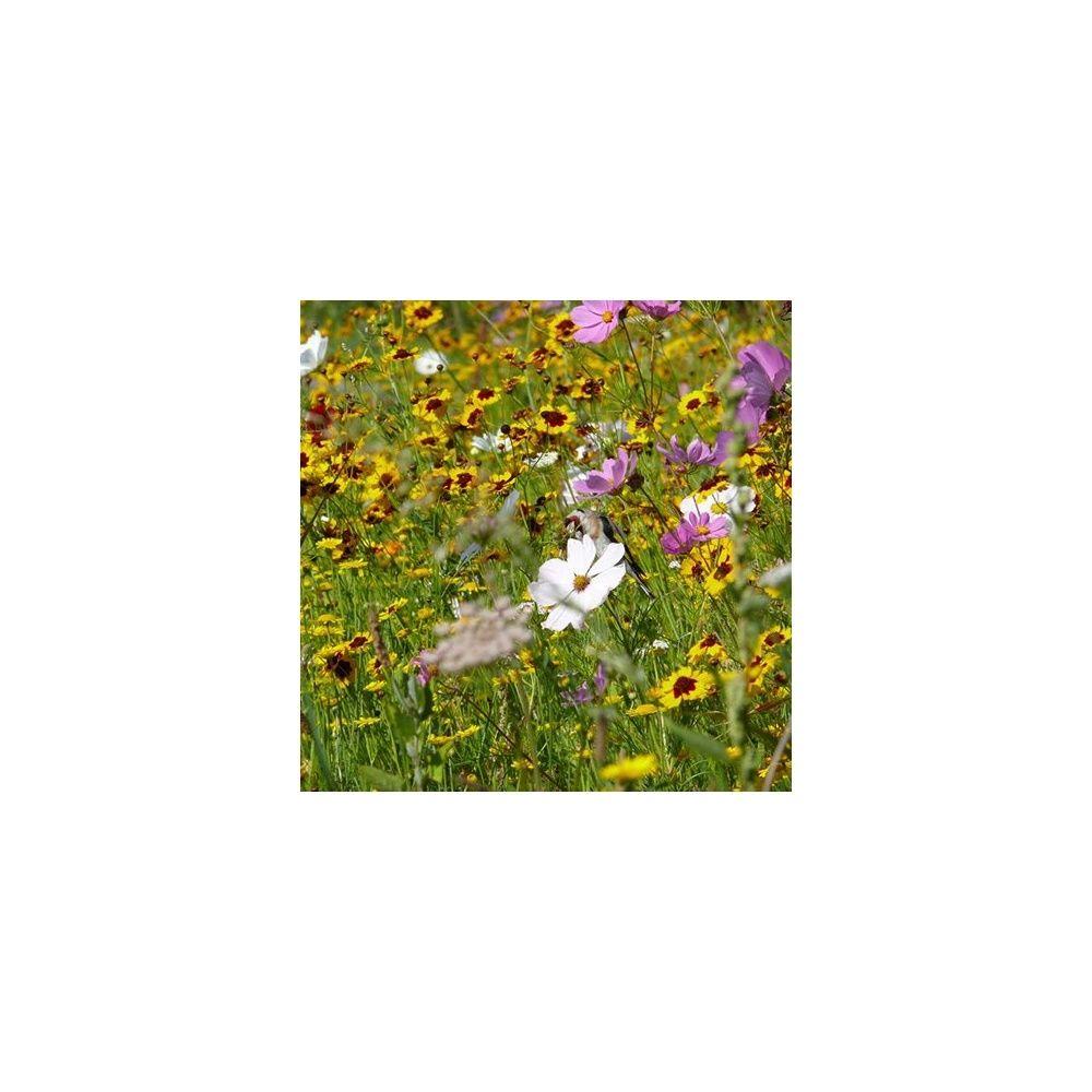 Prairie fleurie les amis du jardin je prends soin des for Au jardin by les amis