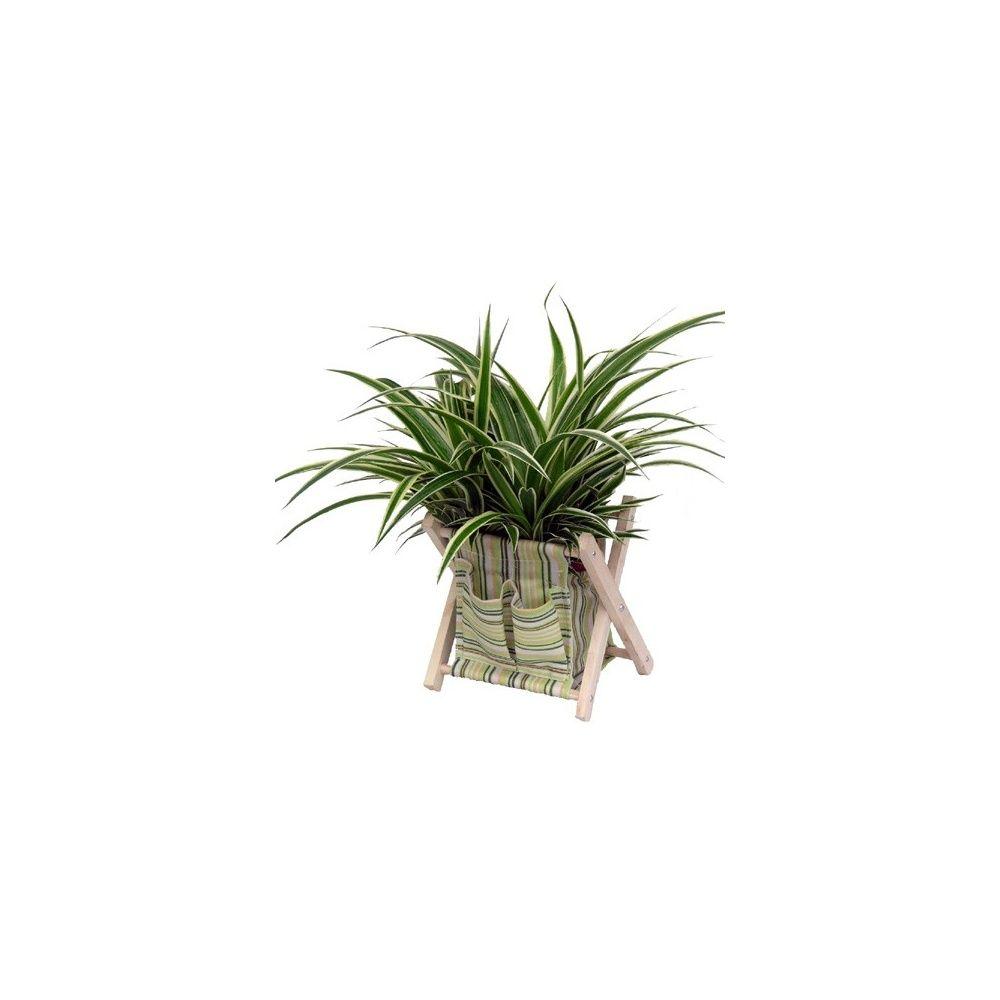 chlorophytum ocean cache pot transat en tissus plantes. Black Bedroom Furniture Sets. Home Design Ideas