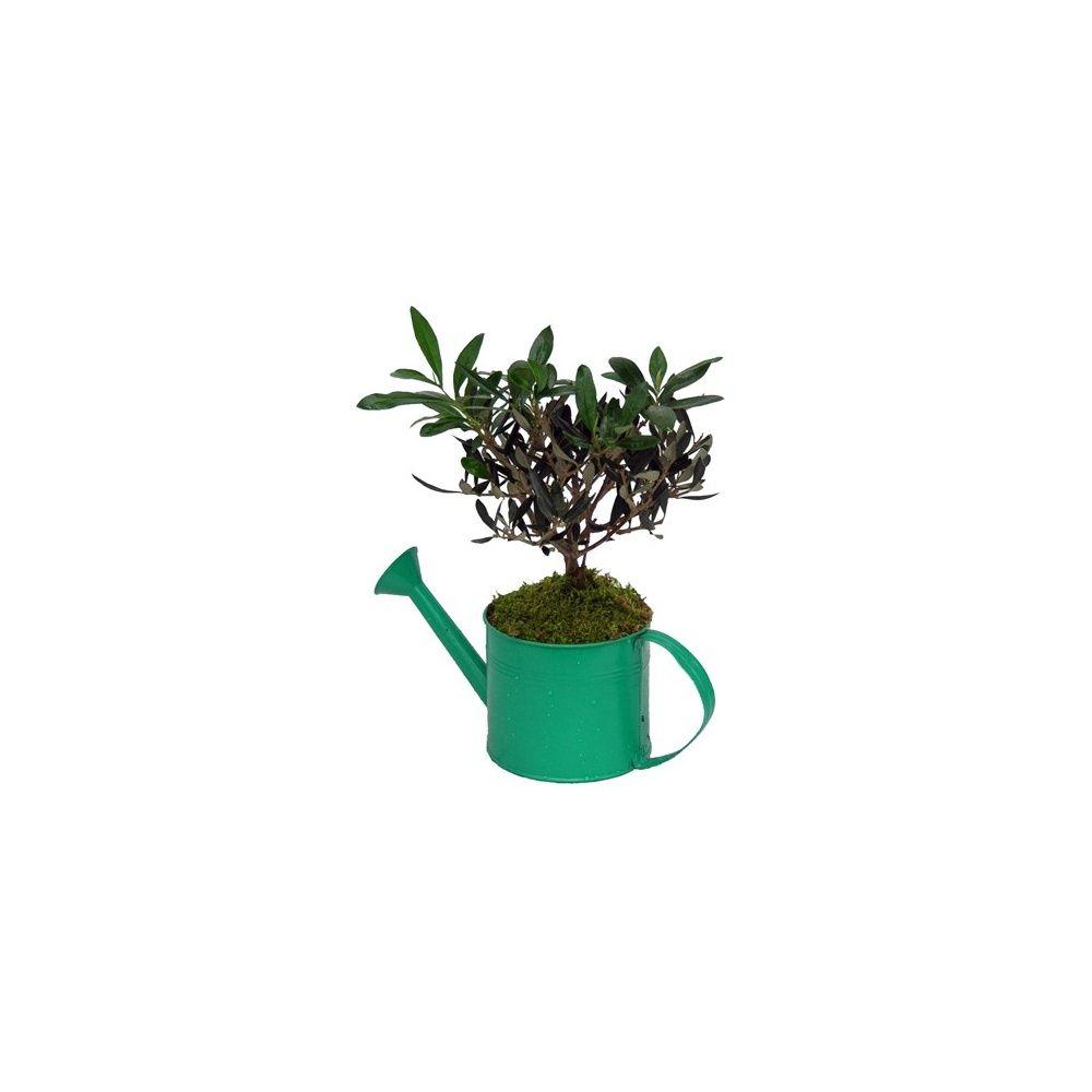 olivier pot en zinc d co plantes et jardins. Black Bedroom Furniture Sets. Home Design Ideas