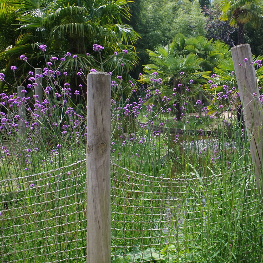 Verveine de buenos aires plantes et jardins - Plante et jardins ...