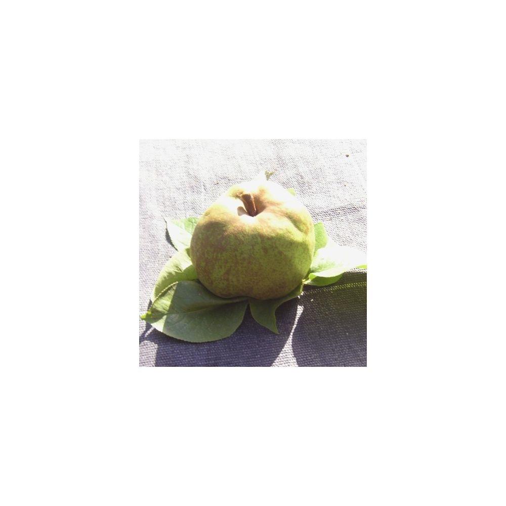 Poirier 39 olivier de serres 39 taille en gobelet en pot plantes et jardins - Taille de l olivier en pot ...