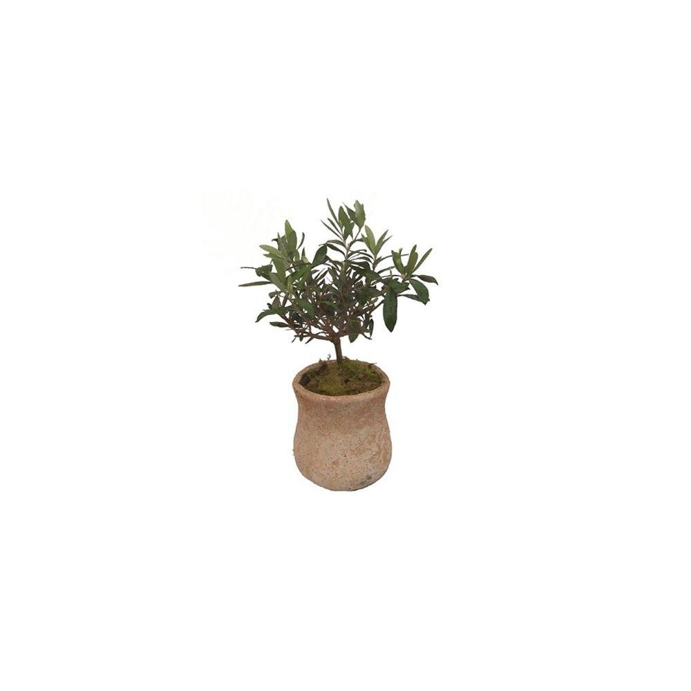 olivier en jarre de terre cuite plantes et jardins. Black Bedroom Furniture Sets. Home Design Ideas