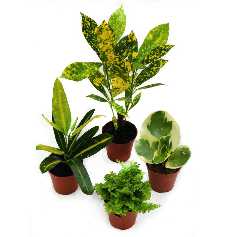 Kit de 4 mini plantes nuance jaune plantes et jardins for Jardin et plantes