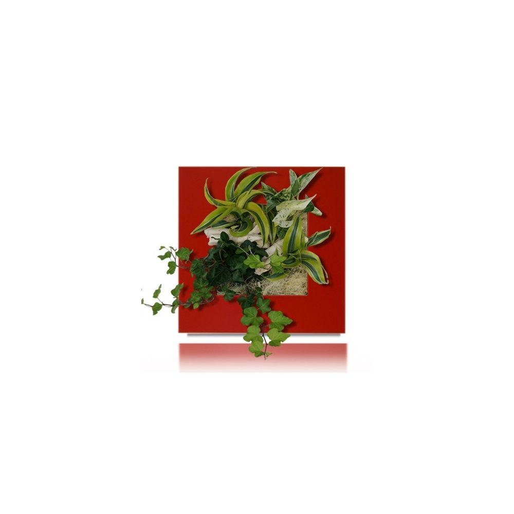 Tableau v g tal kyoto rouge wallflower plantes et jardins - Tableau vegetal ...