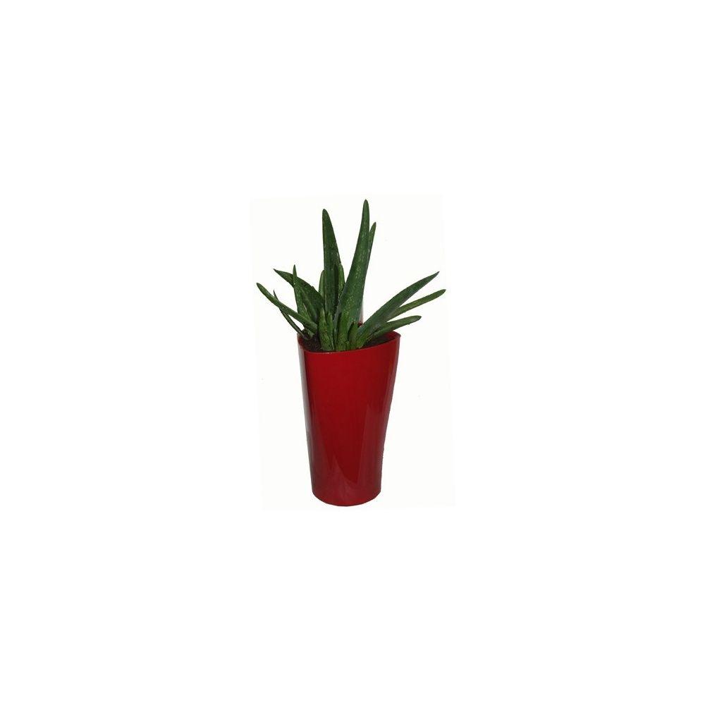 Aloe vera rempot dans pot lechuza delta rouge plantes et jardins - Aloe vera en pot ...