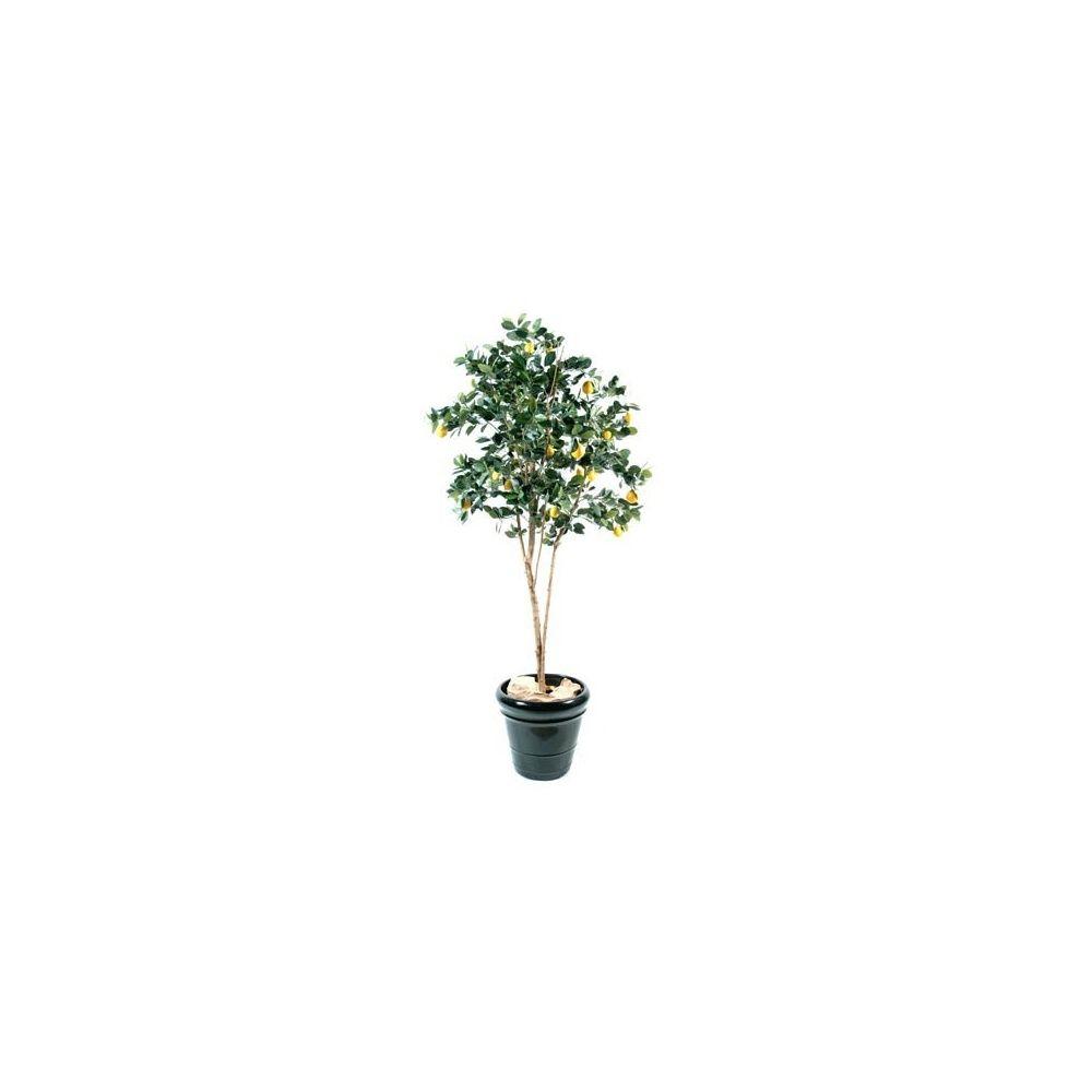 citronnier golden h150cm pot classique plantes et jardins. Black Bedroom Furniture Sets. Home Design Ideas