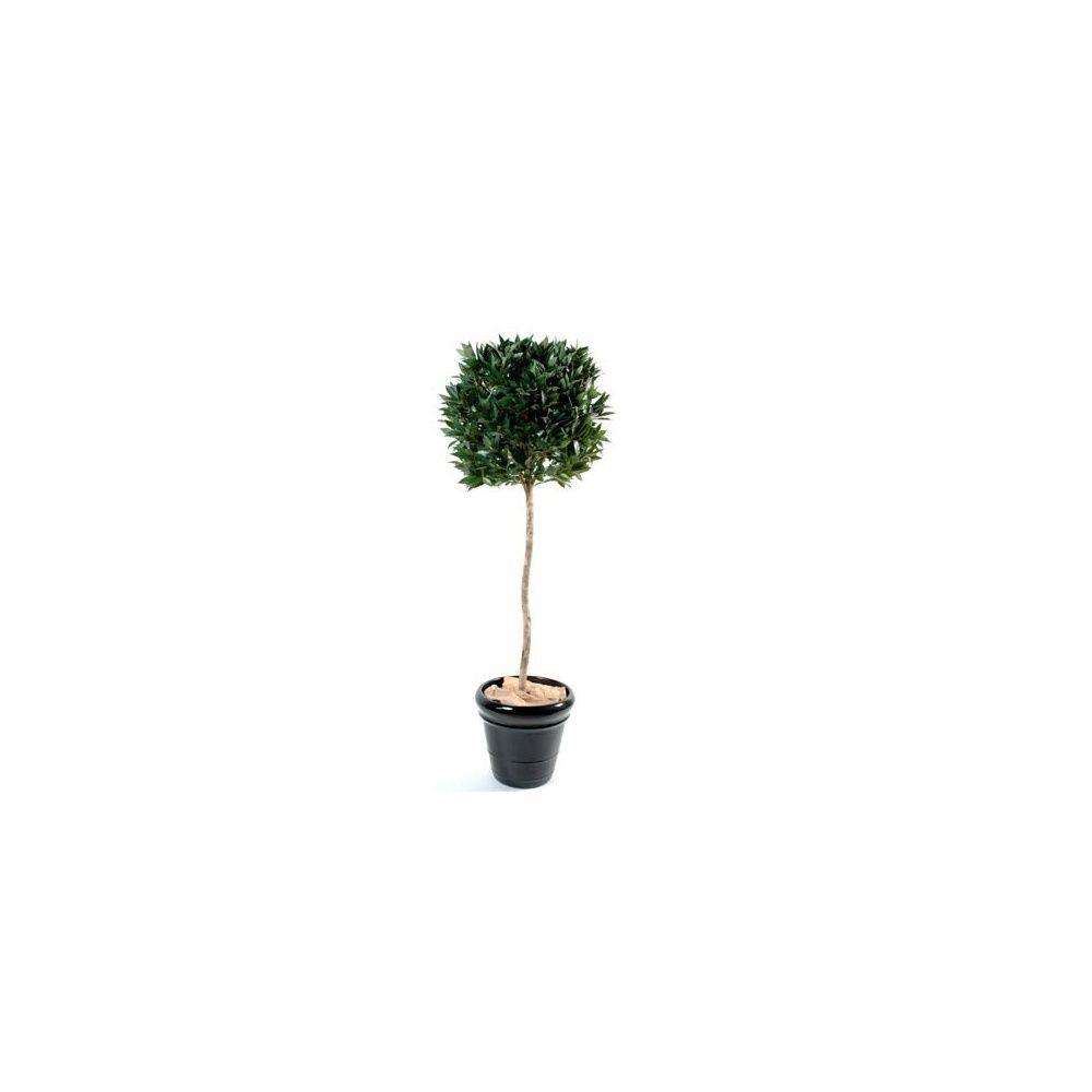 Laurier boule sur tige h180cm pot classique plantes et - Laurier tige en pot ...