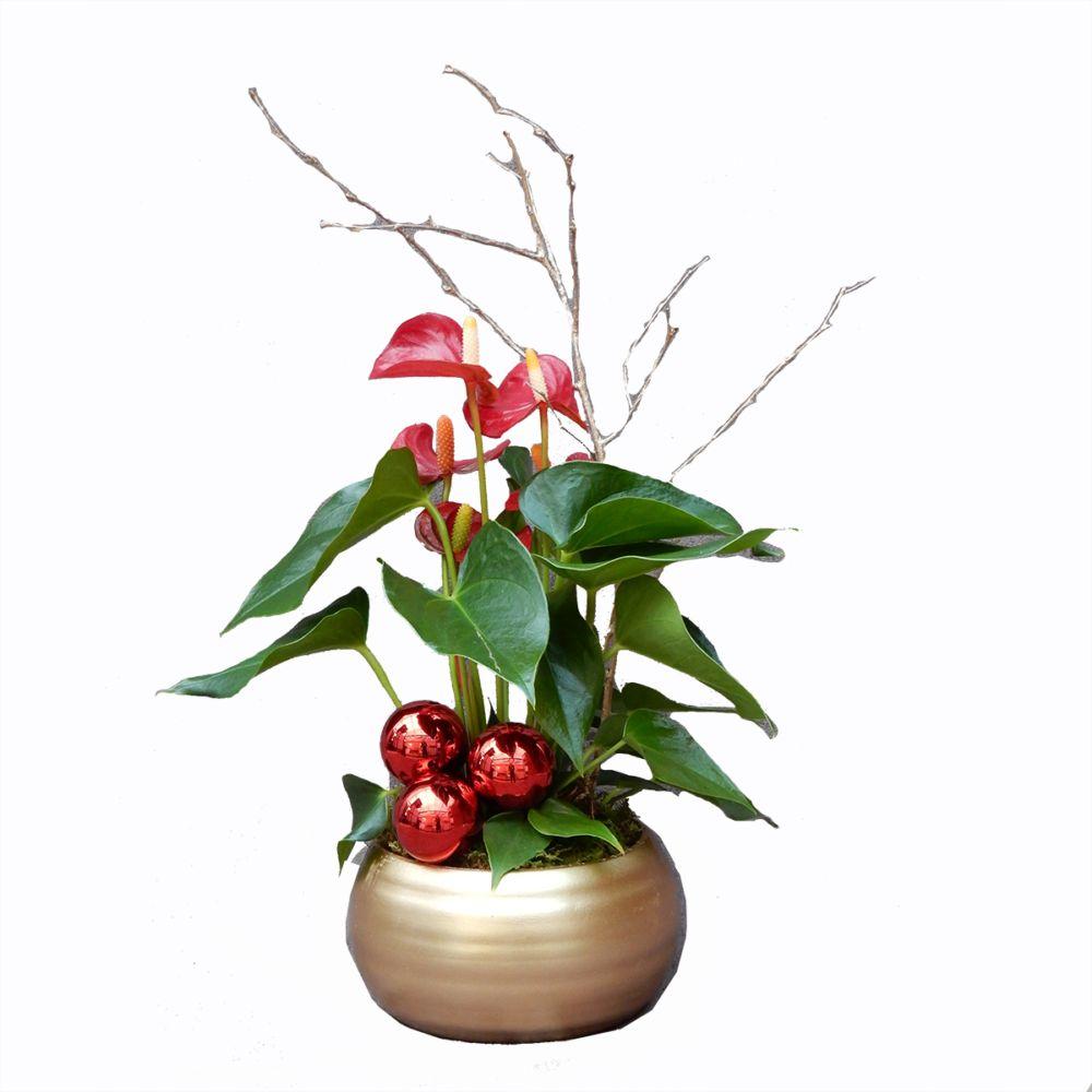 S lection no l anthurium rouge en pot dor plantes et for Plante noel rouge