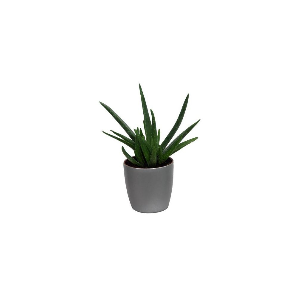 aloe vera cache pot argent plantes et jardins. Black Bedroom Furniture Sets. Home Design Ideas