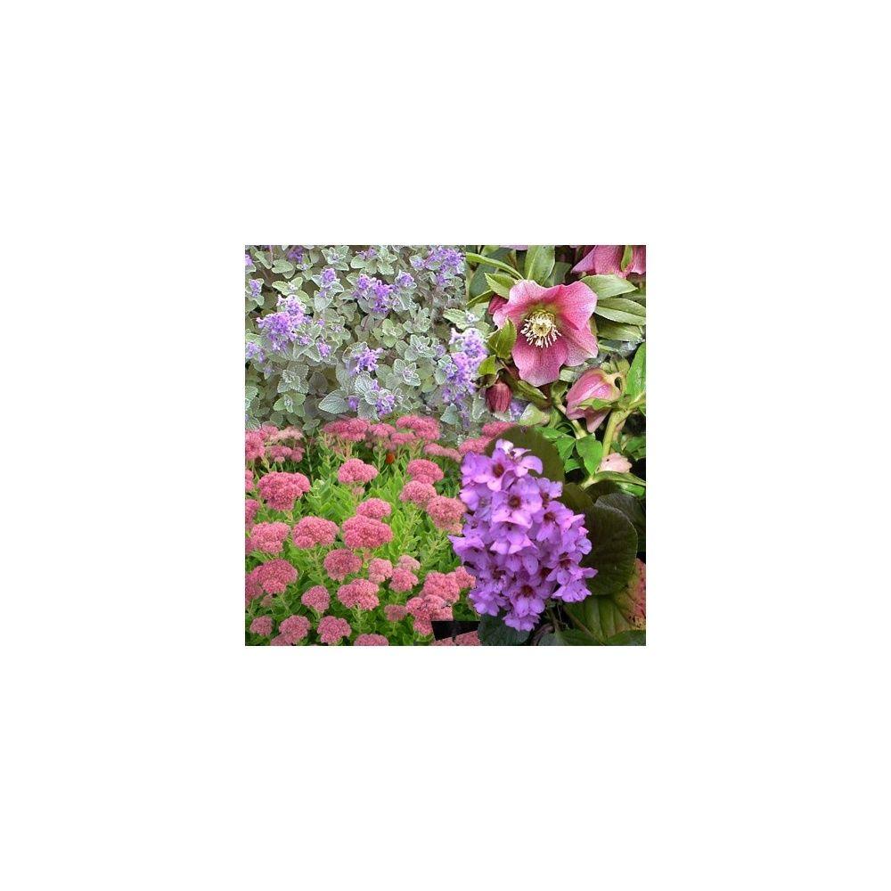 Assortiment de 12 vivaces 12 mois de fleurs plantes et for Fleurs plantes et jardins