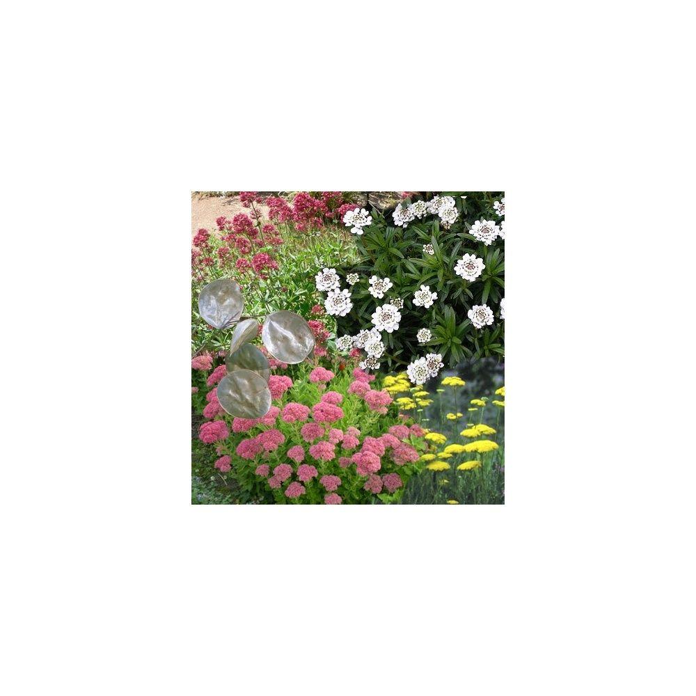Assortiment vivaces pour attirer oiseaux et papillons plantes et jardins - Plantes pour papillons ...