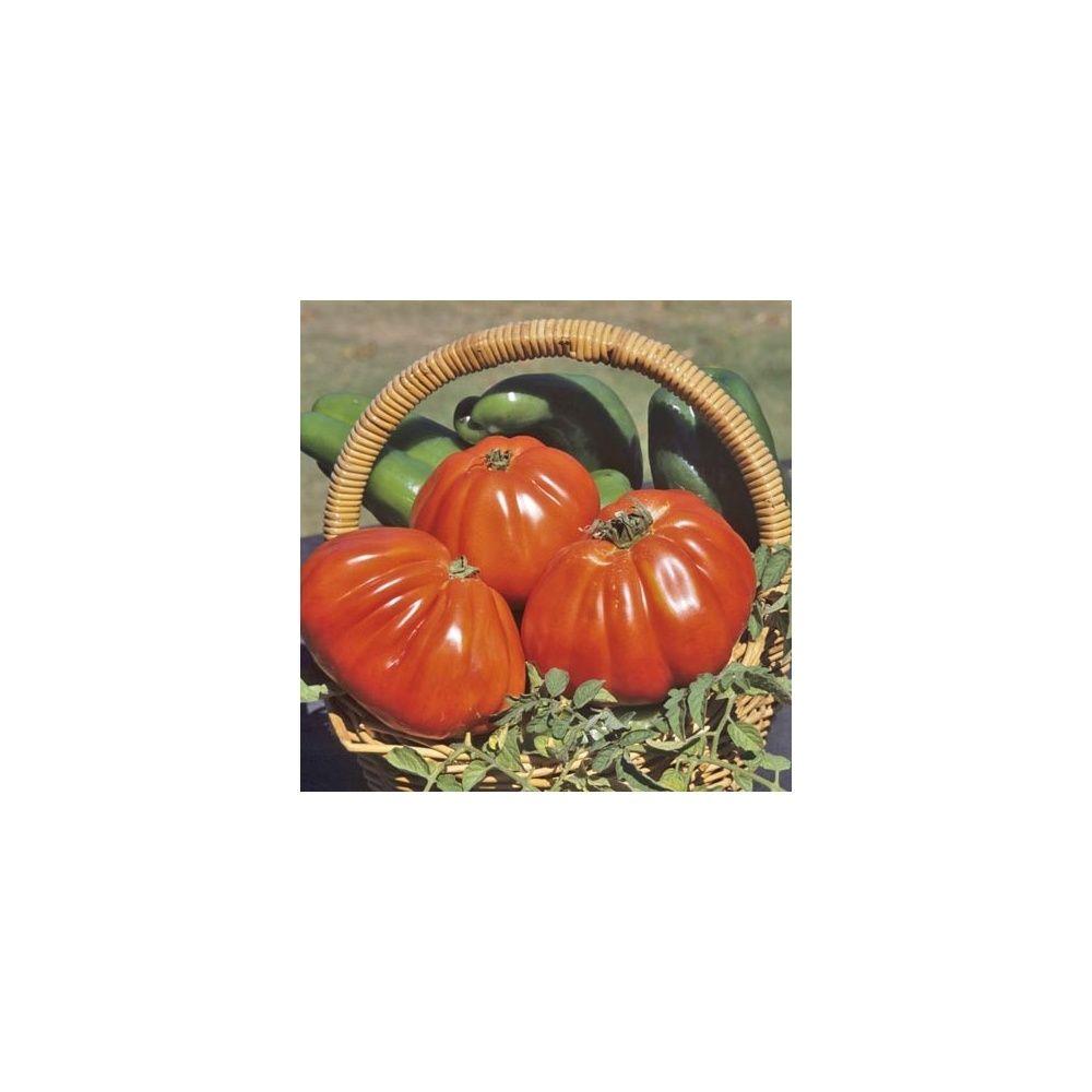 Tomate type coeur de boeuf 39 corazon 39 f1 bio plantes et - Planter des tomates coeur de boeuf ...