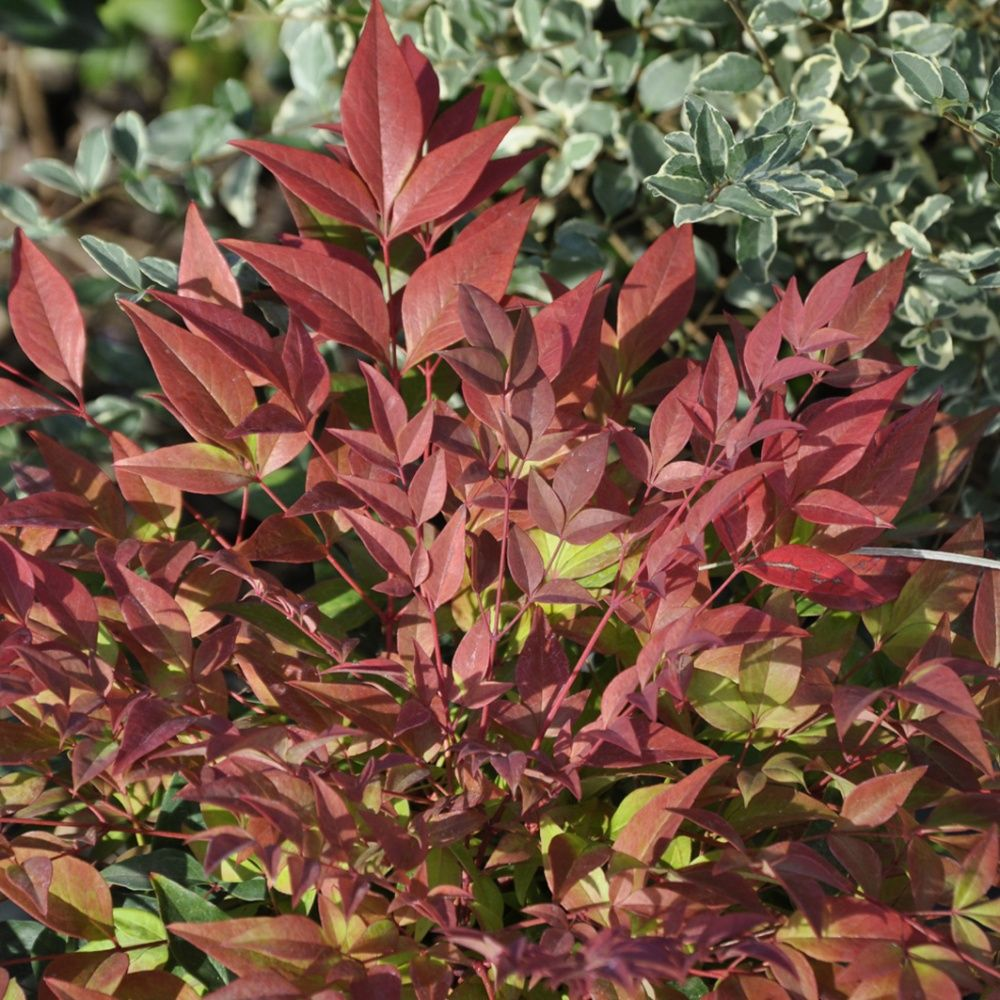 Plante rampante pour talus fashion designs - Plante couvre sol vivace ...