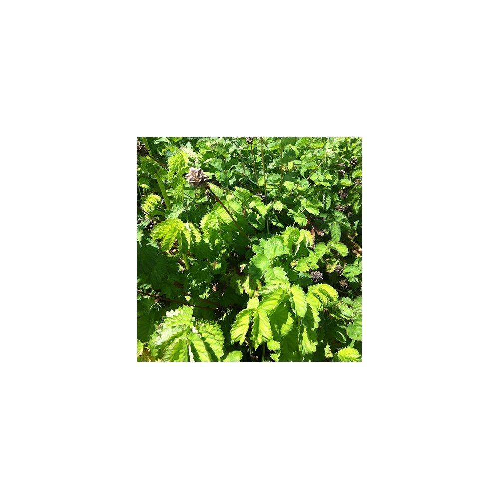 Pimprenelle plantes et jardins for Plantes et jardins adresse