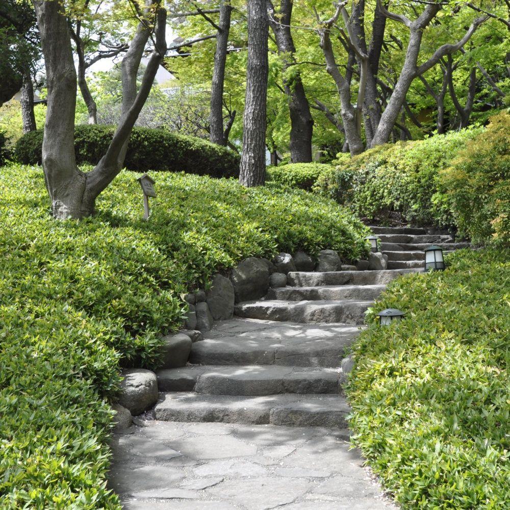 Stunning salon de jardin en bambou entretien ideas for Entretien plantes jardin
