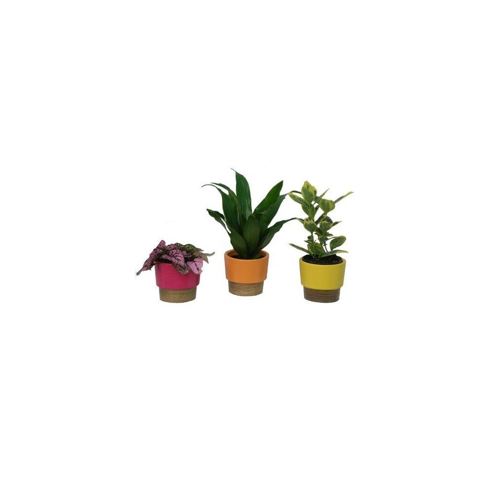 assortiment de 3 mini plantes cache pots jaune orange rose plantes et jardins. Black Bedroom Furniture Sets. Home Design Ideas