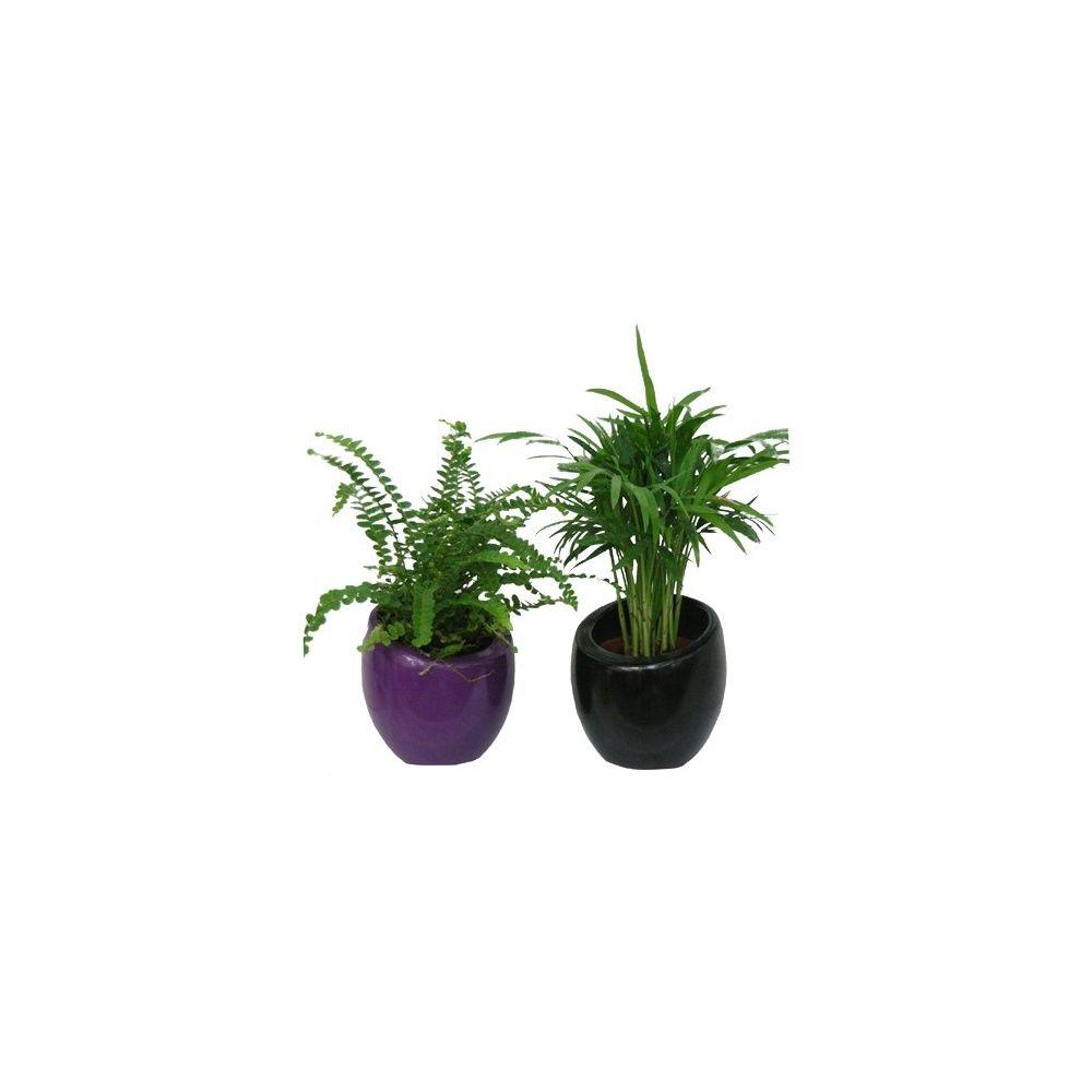 Assortiment de 2 mini-plantes + cache-pots noir-violet - Plantes ...