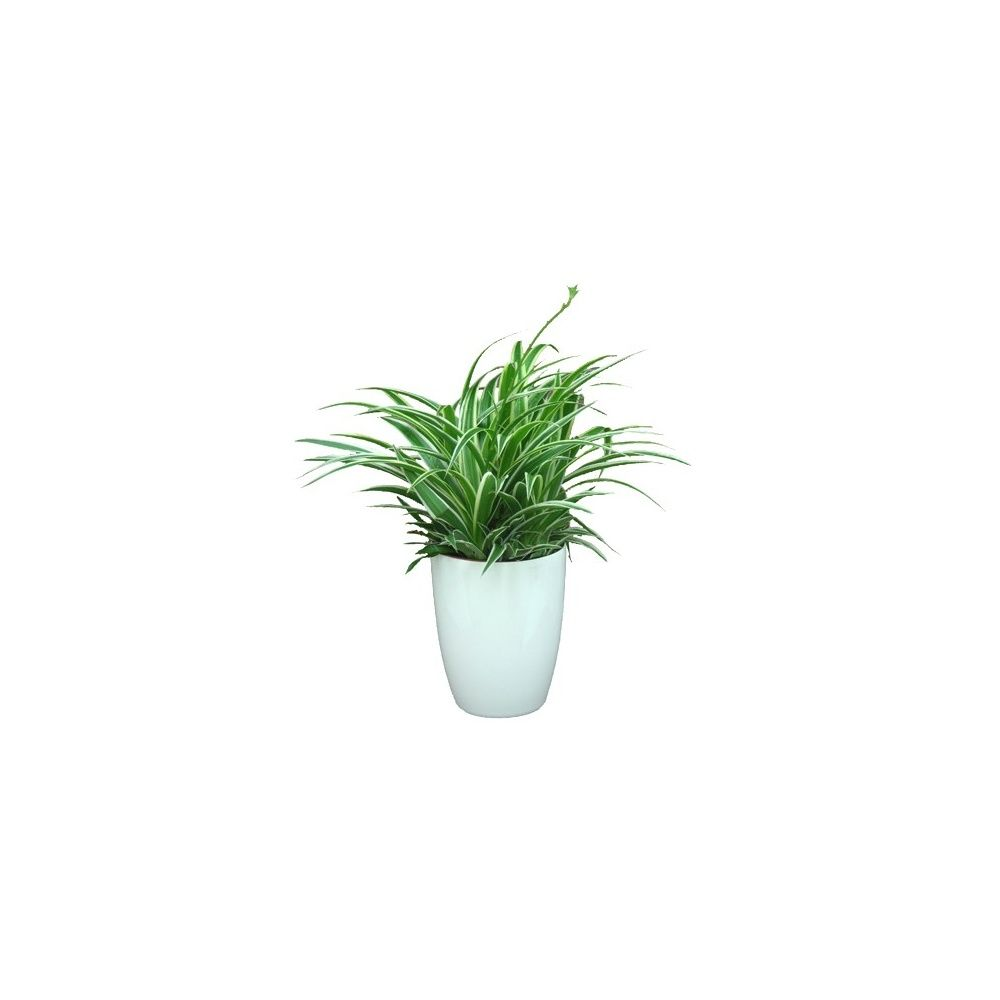 chlorophytum ocean cache pot blanc plantes et jardins. Black Bedroom Furniture Sets. Home Design Ideas