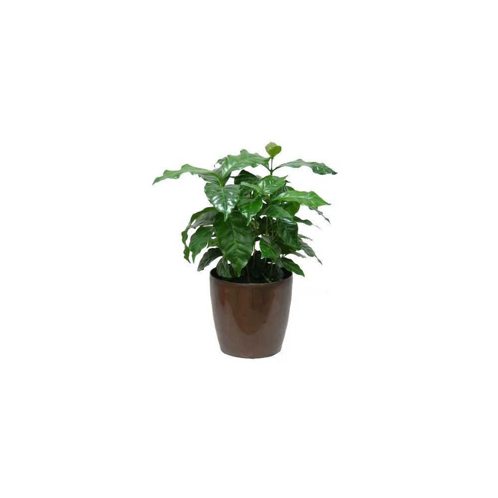 caf ier 30 cm cache pot bronze plantes et jardins. Black Bedroom Furniture Sets. Home Design Ideas