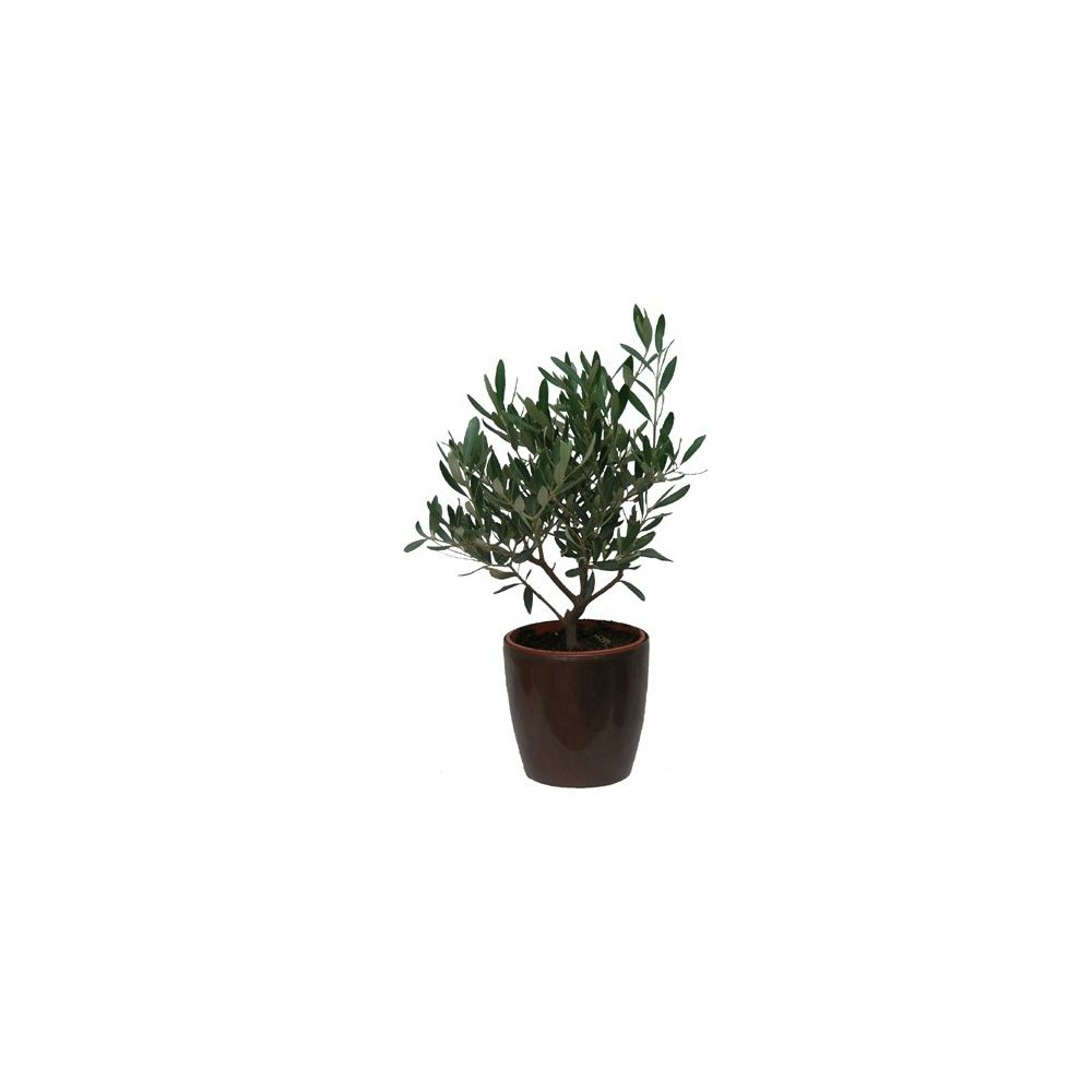 olivier cache pot bronze plantes et jardins. Black Bedroom Furniture Sets. Home Design Ideas