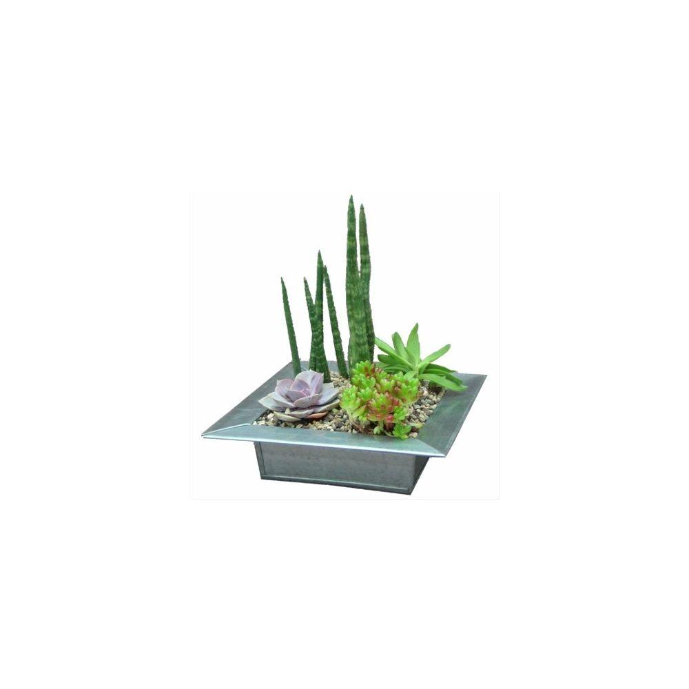 Kit composition de plantes grasses plat en zinc plantes et jardins - Rempoter une plante grasse ...