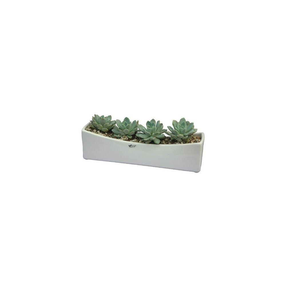 kit composition d 39 echeveria c ramique design plantes. Black Bedroom Furniture Sets. Home Design Ideas