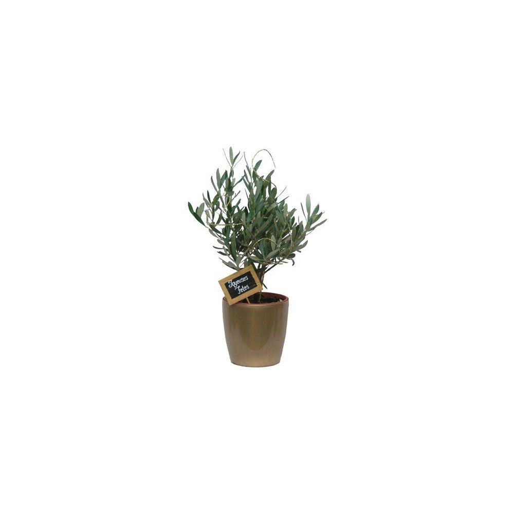 olivier cache pot dor sp cial f tes plantes et jardins. Black Bedroom Furniture Sets. Home Design Ideas