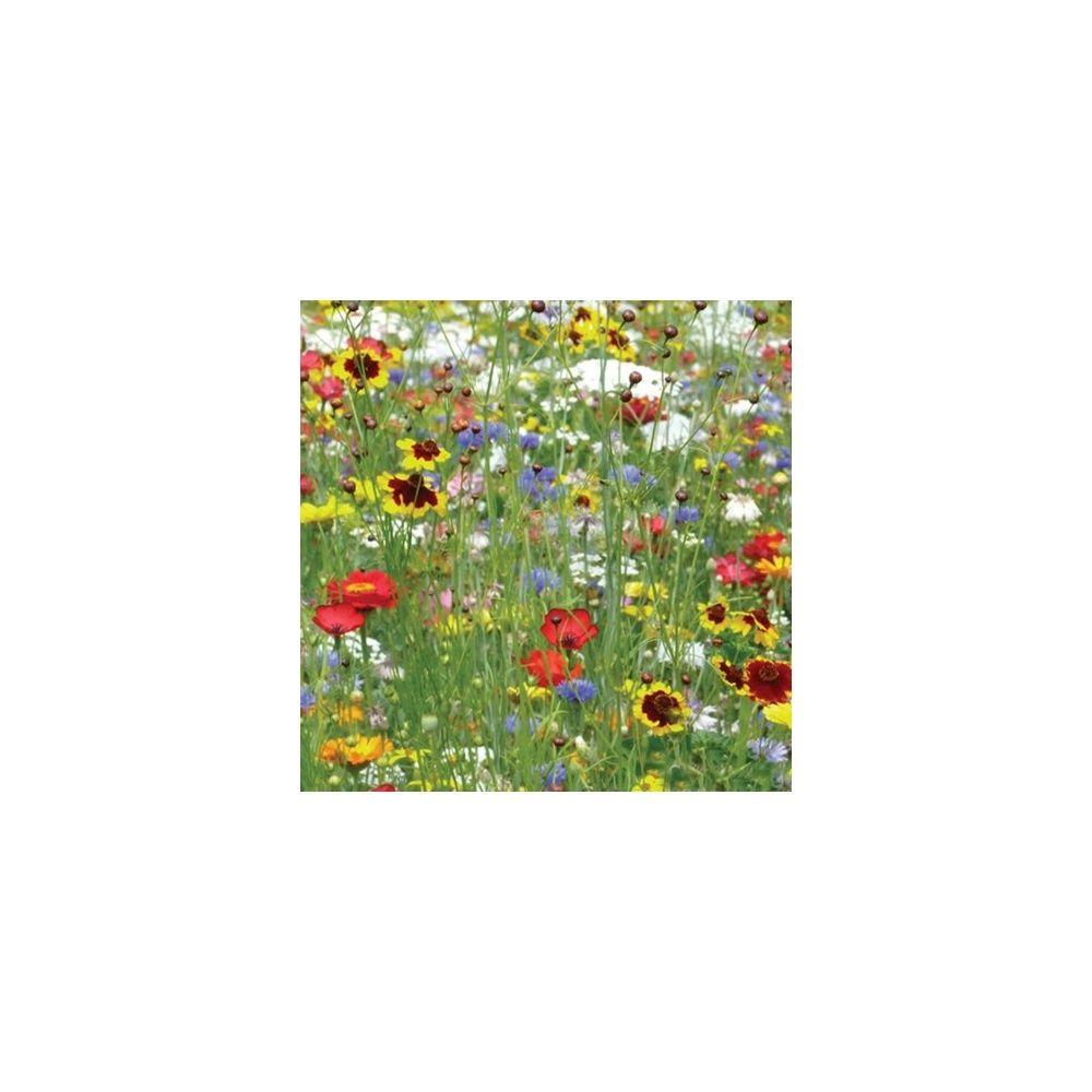 Prairie fleurie les amis du jardin coccinelles 30m for Au jardin by les amis
