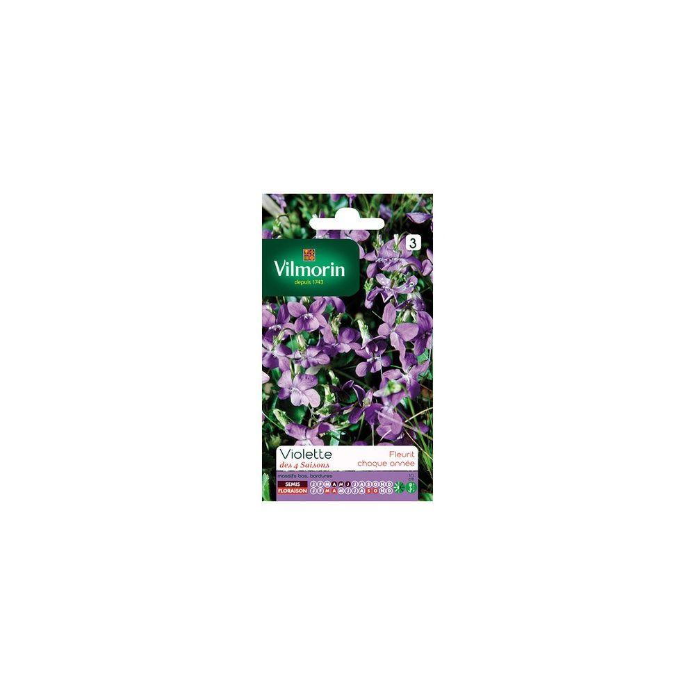 Violette des 4 saisons plantes et jardins for Jardin 4 saison