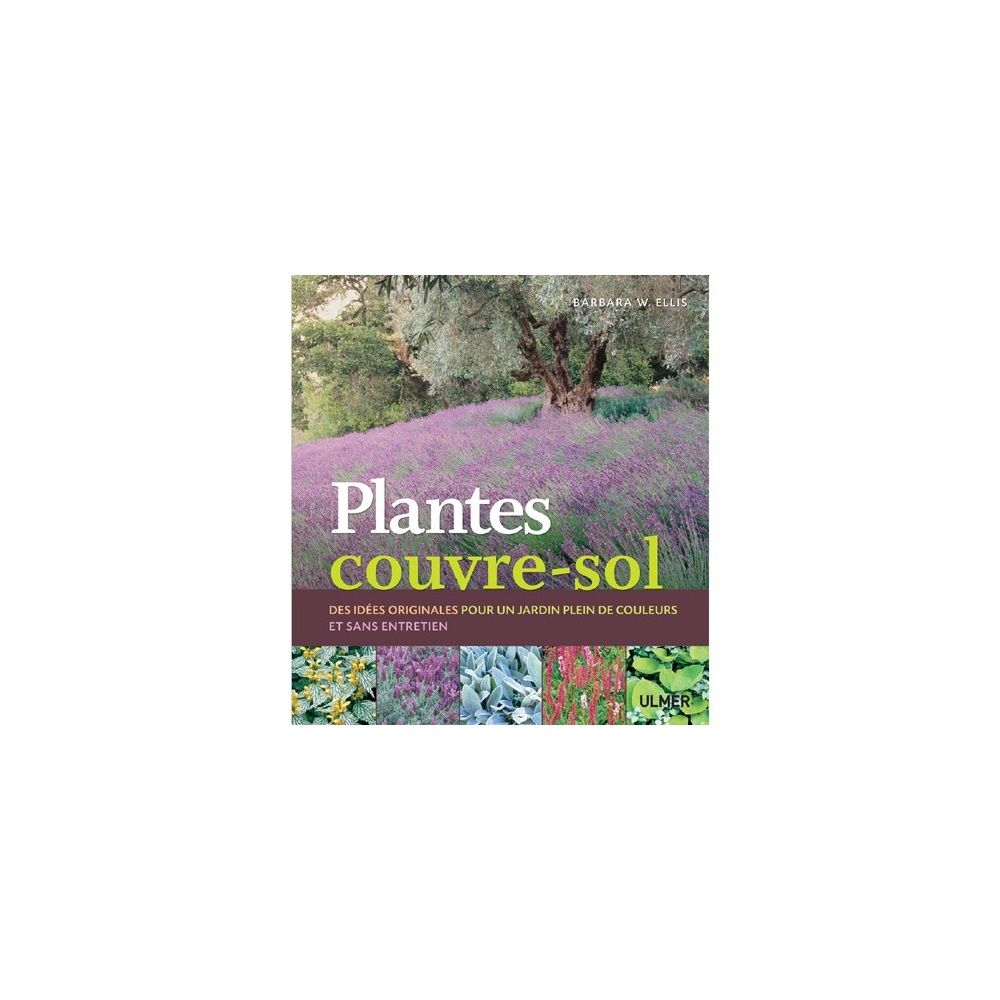 Plantes couvre sol plantes et jardins for Jardin japonais plantes couvre sol