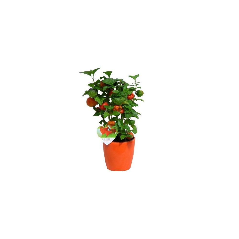 lanterne chinoise cache pot orange plantes et jardins. Black Bedroom Furniture Sets. Home Design Ideas