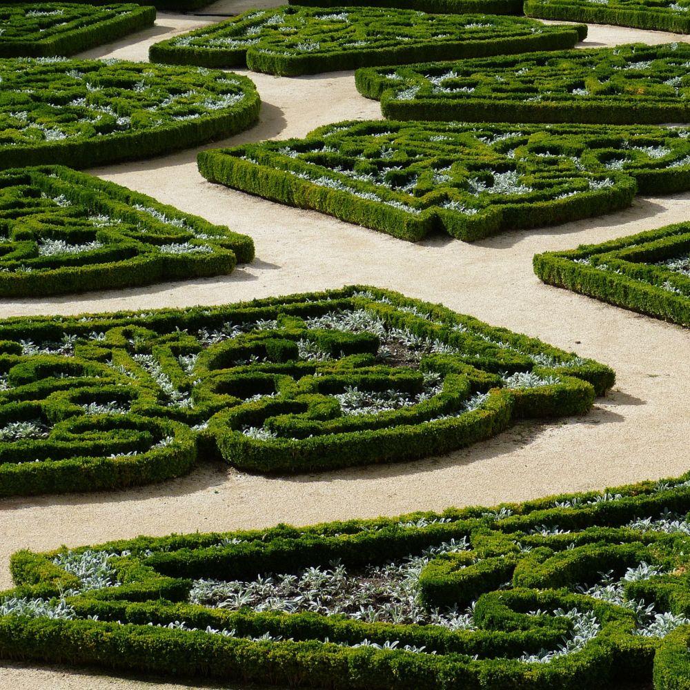 Buis commun plantes et jardins for Plante et jardins